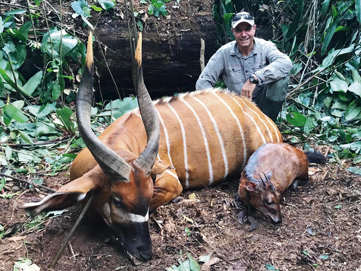 Bongo hunt in the rainforest of Cameroon