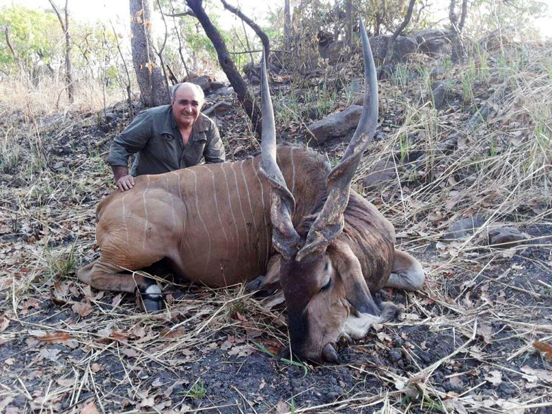 Giant Eland trophy harvested in Cameroon