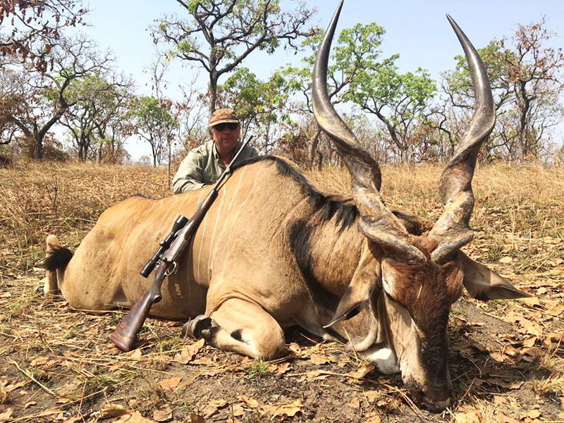 Giant Eland harvested in Cameroon