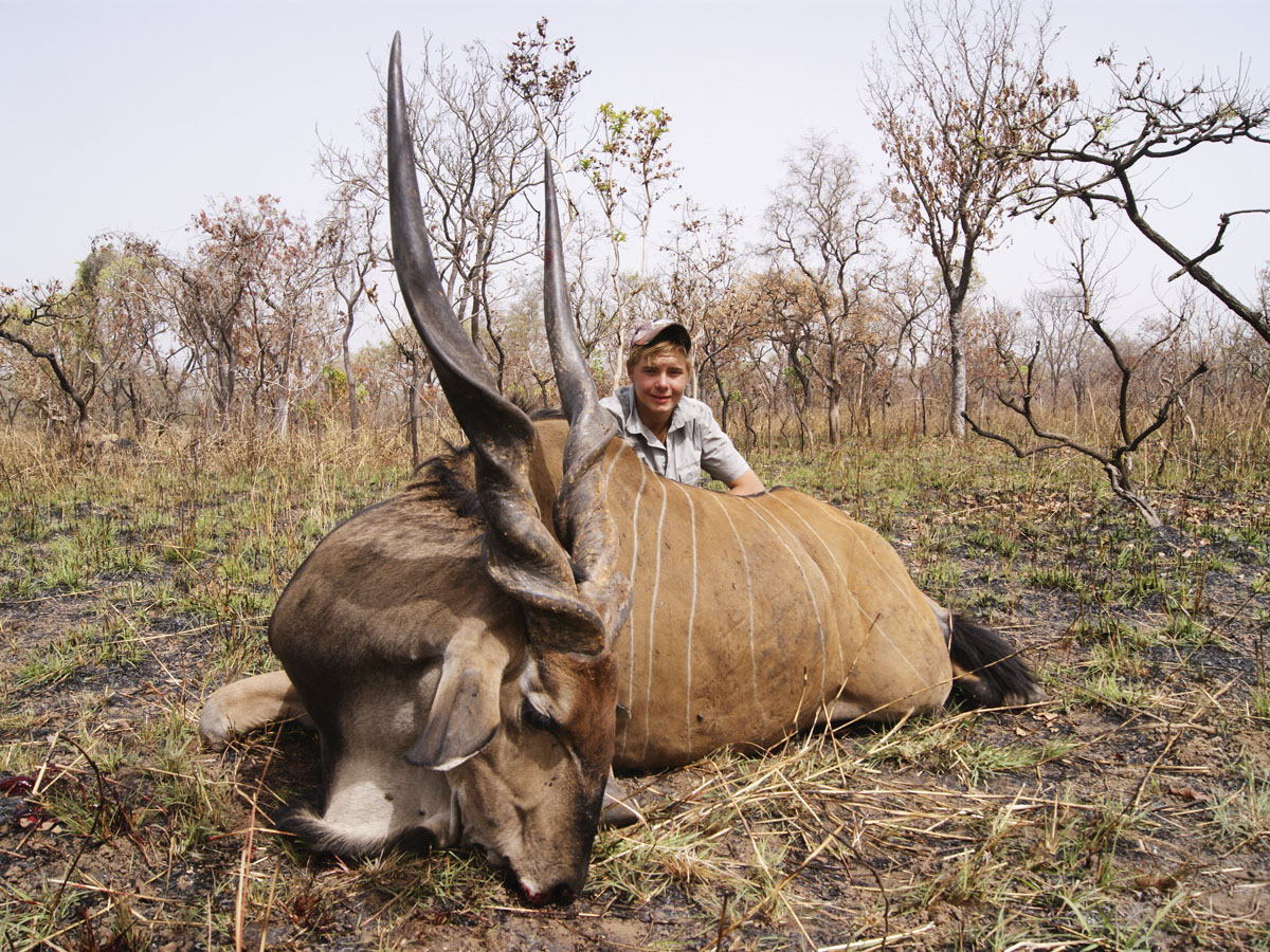 Very big Giant Eland hunted in Cameroon