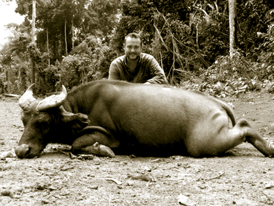 Forest Buffalo in Cameroon