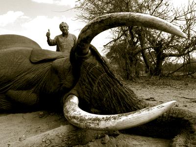 Elephant hunt in Zimbabwe