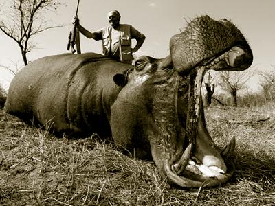 Hippo hunt in Zimbabwe