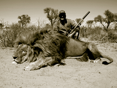 Lion hunt in South Africa