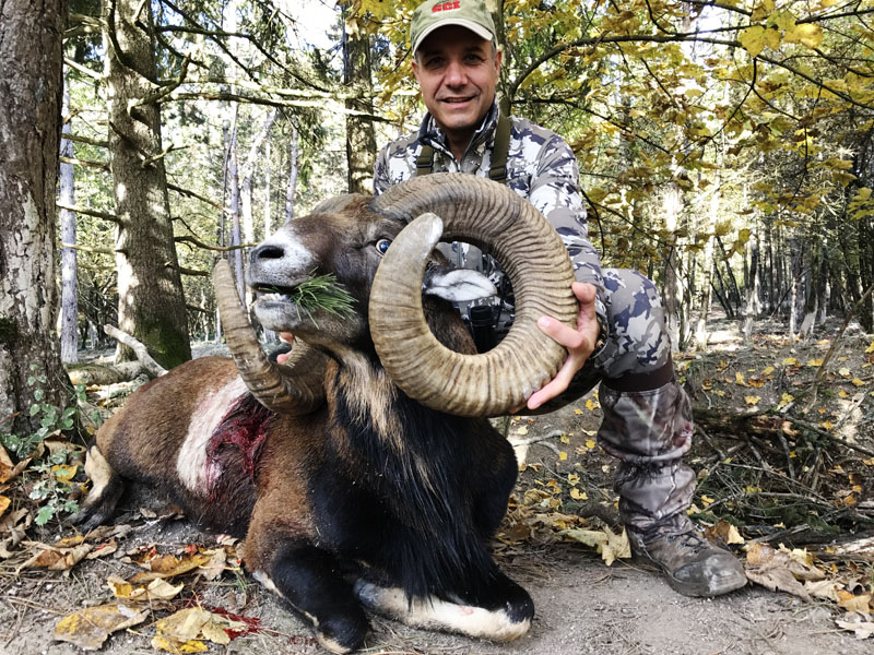 Hunter with a big mouflon trophy in France