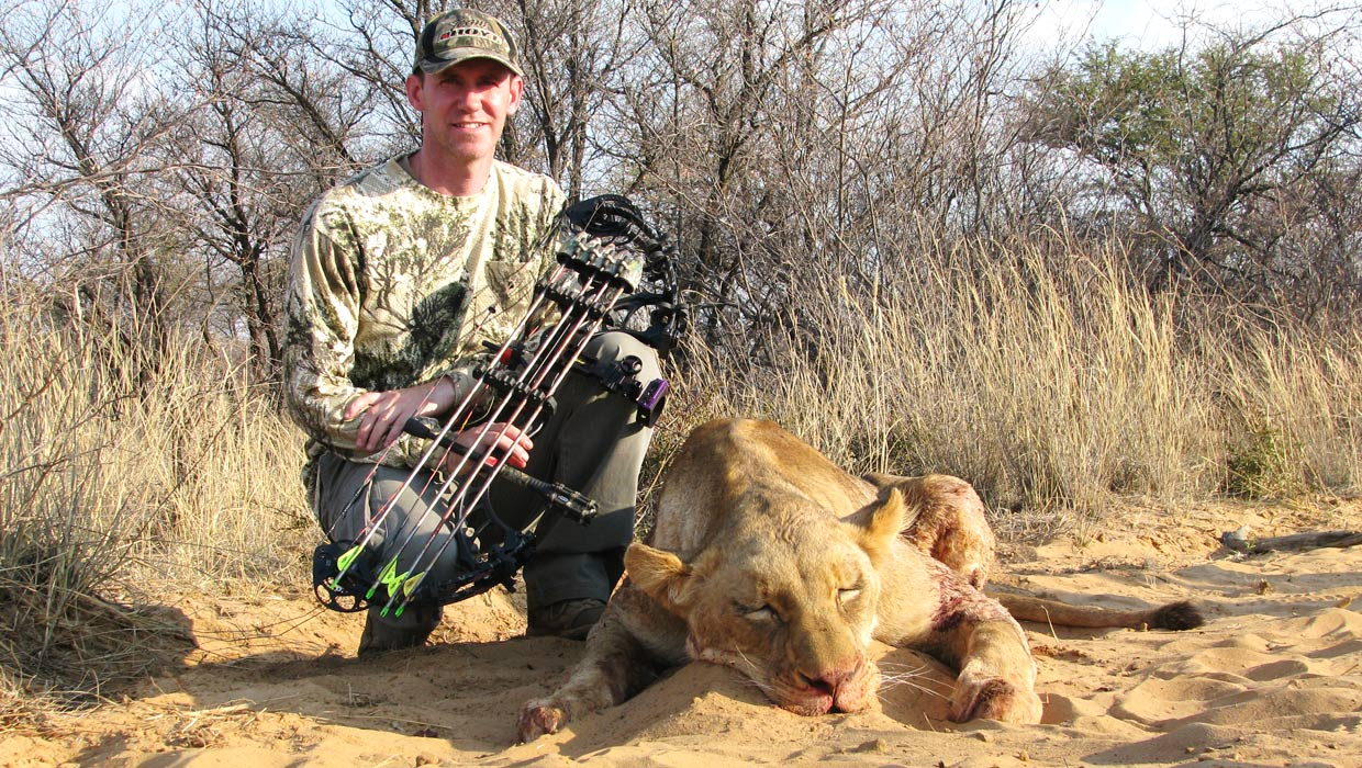 Lioness hunt with bow