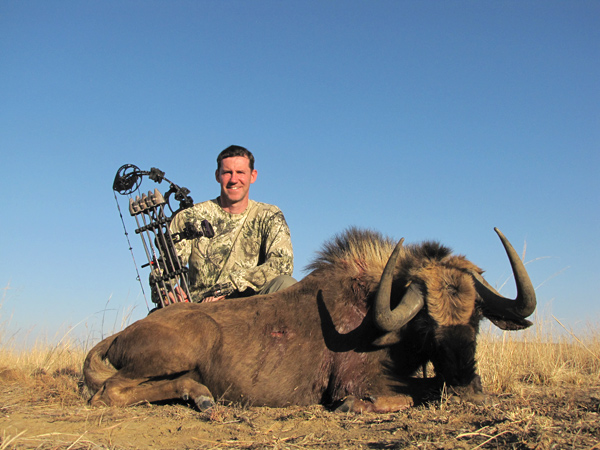 Black Wildebeest bowhunting in South Africa